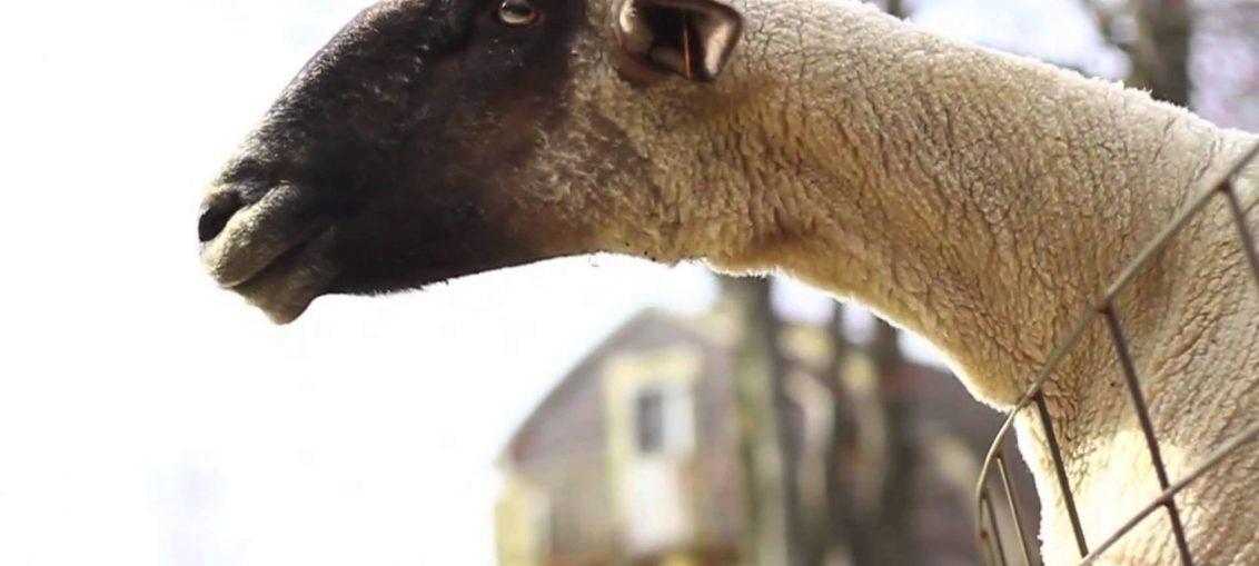 Животни издават смешни звуци